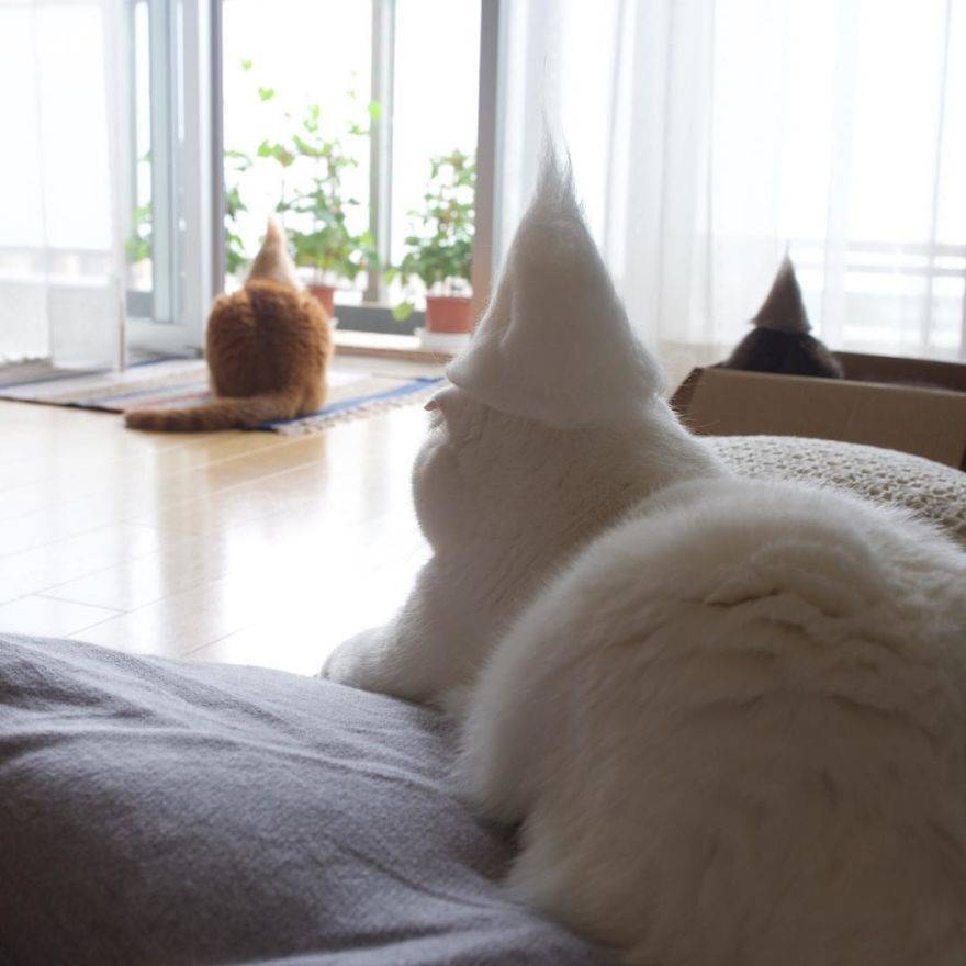 Cats-in-hats-made-from-their-own-hair-582e5a04c7476__880