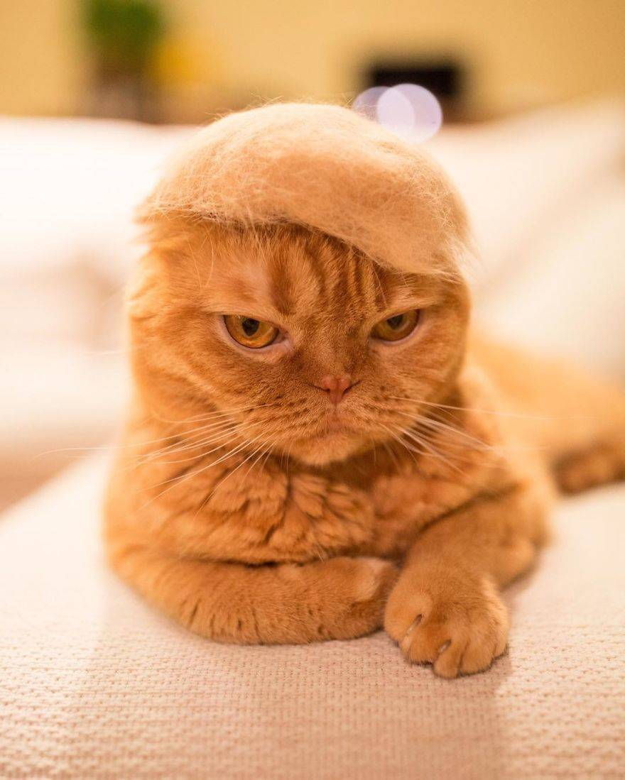 Cats-in-hats-made-from-their-own-hair-582ebf440a8aa__880