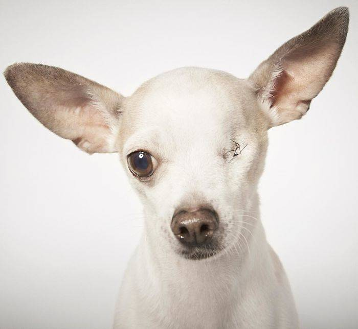 Fashion-Photographer-Helps-Abandoned-Dogs-Find-Forever-Homes-581c46aca633e__700