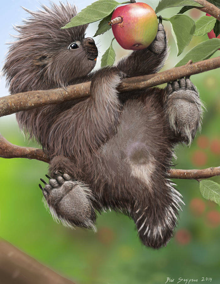 baby_porcupine_loves_macintosh_apples_by_psithyrus-d7bowjd-582f1c076b81b__700