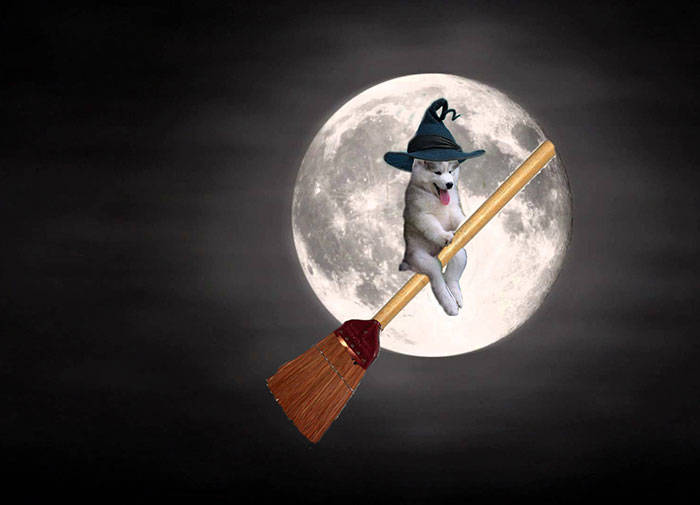 husky-tree-photoshop-battle-19-581c4174bc975__700