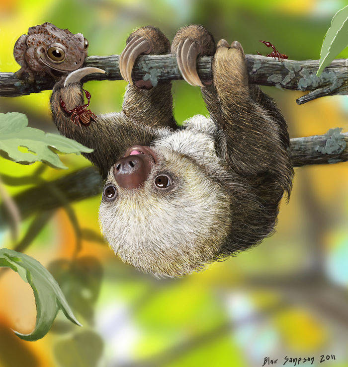 nature__s_kawaii__baby_sloth_by_psithyrus-d423bty-582f1cc912922__700