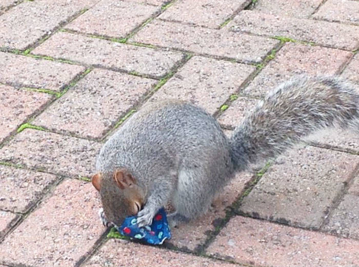 2tiny-christmas-presents-squirrels-dad-4