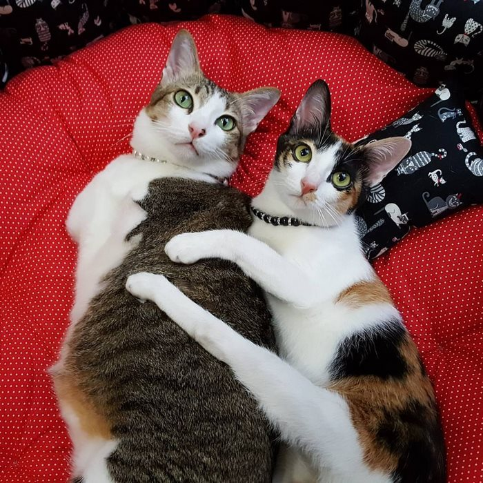 cat-two-back-legs-able-thailand-14