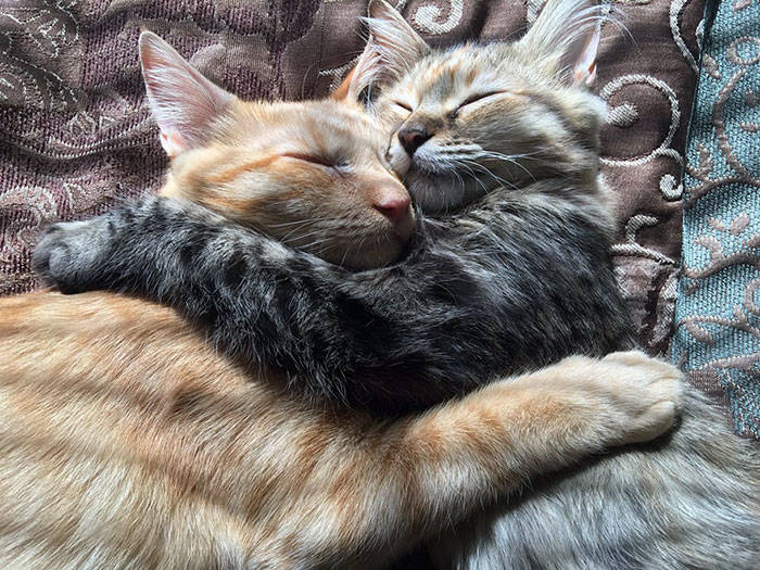 cats-kissing-in-love-louie-luna-6-1