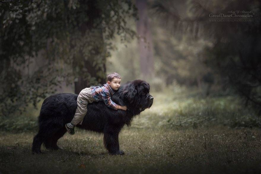 little-kids-big-dogs-photography-andy-seliverstoff-16-584fa91bae708__880