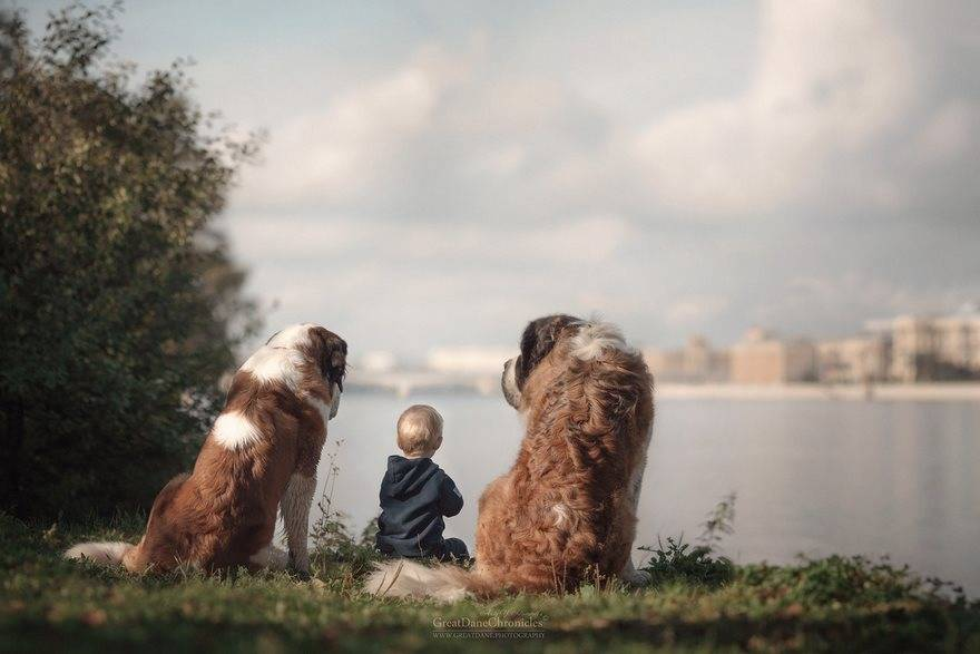 little-kids-big-dogs-photography-andy-seliverstoff-58-584fa983309ed__880