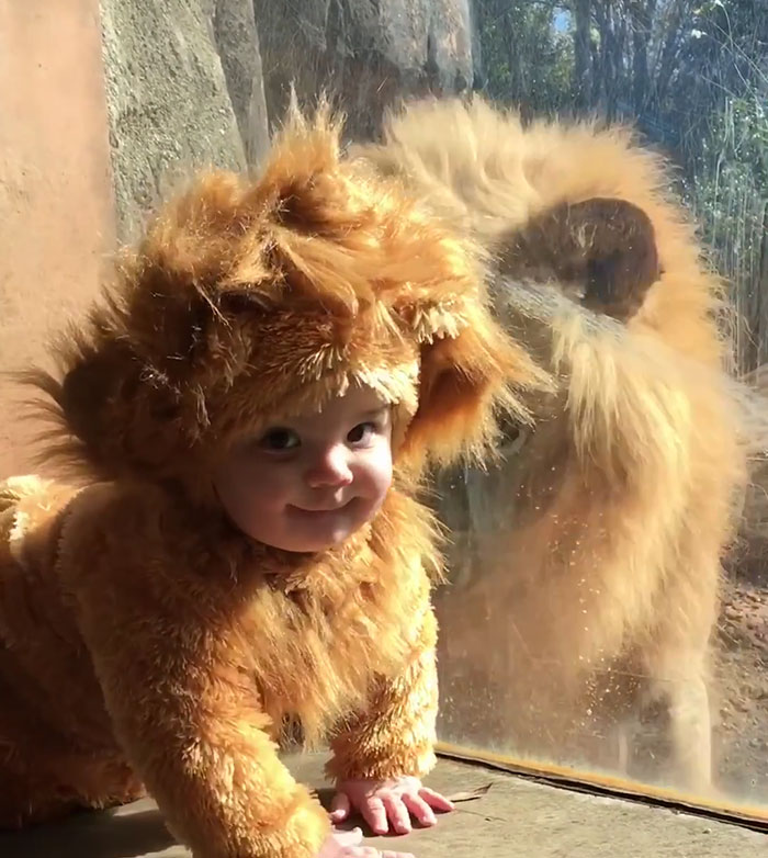 toddler-dressed-lion-costume-aryeh-zoo-atlanta-4