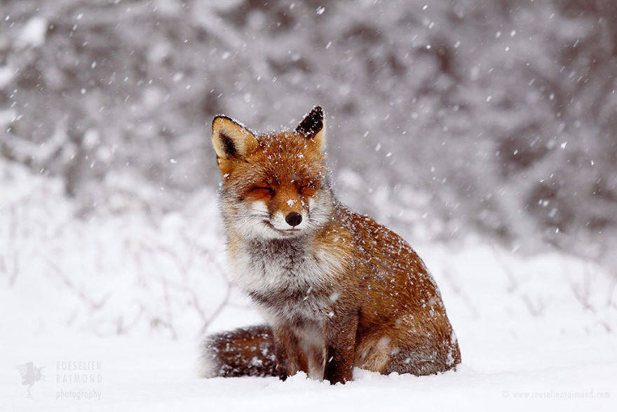 wild-fox-photography-christmas-fairytale-roeselien-raimond-2-58525f3e7babd__880
