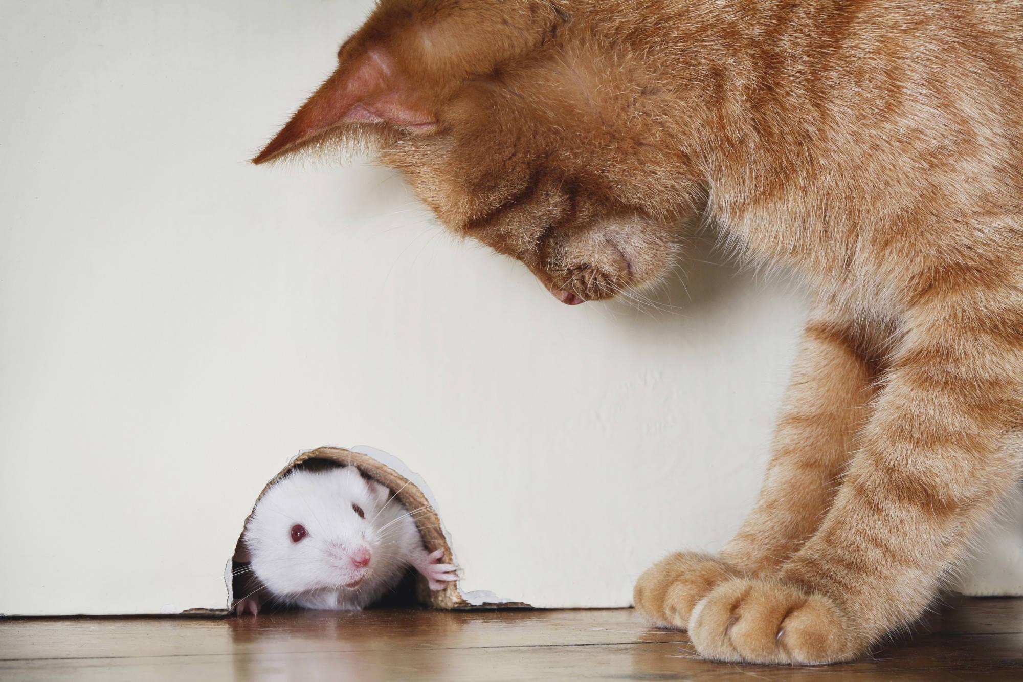 Картинки про кошку и мышку