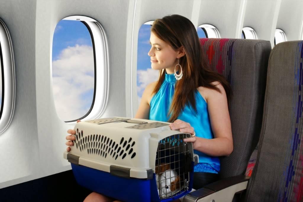 Зачем при взлете и посадке просят открыть шторки на окнах