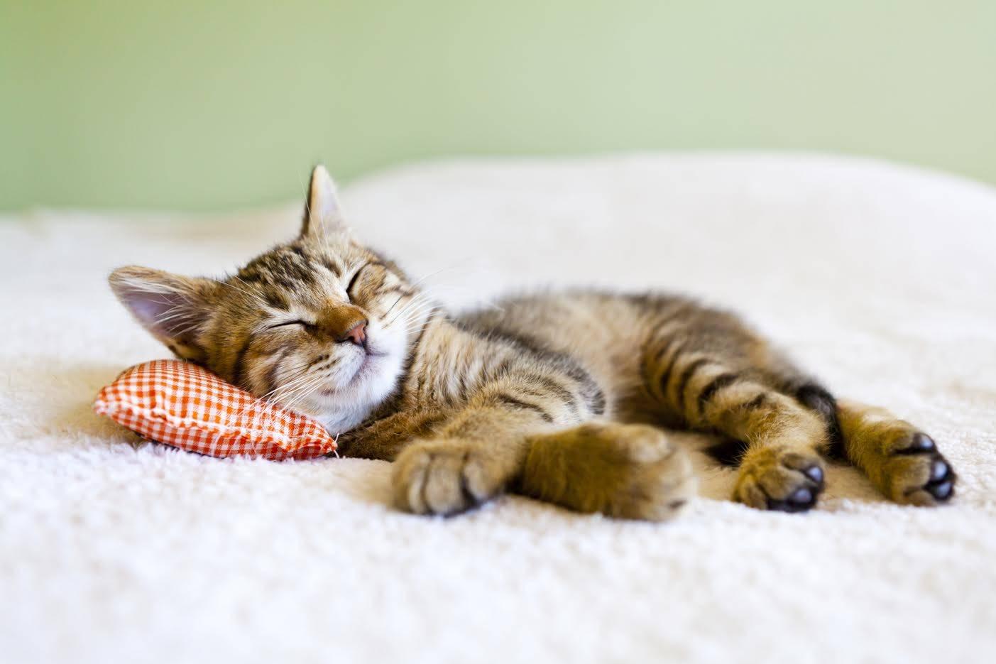 Красивые фото котят с ромашками очень умные