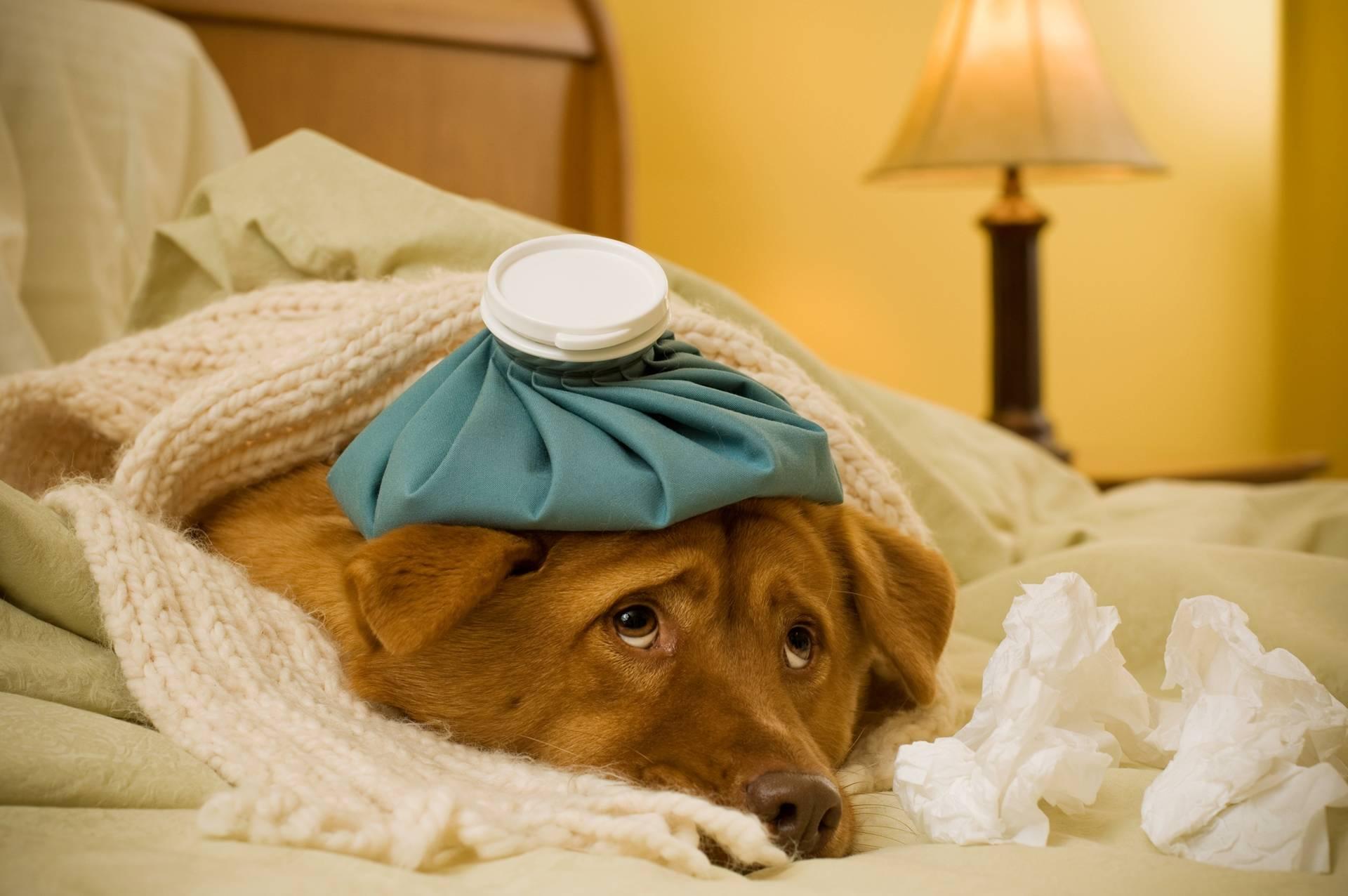 Картинки собак выздоравливай