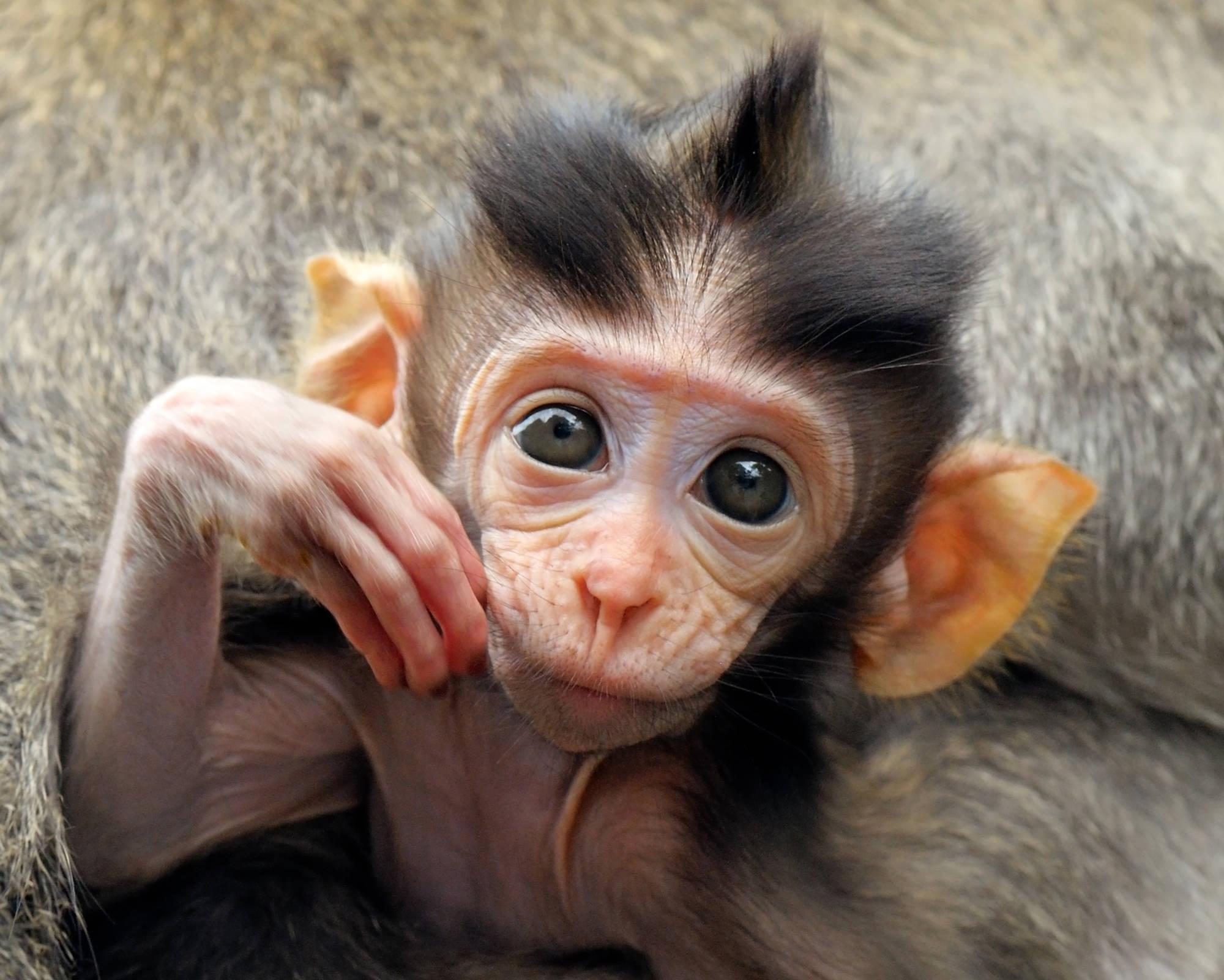 Красивые смешные картинки обезьян посмотрев фото