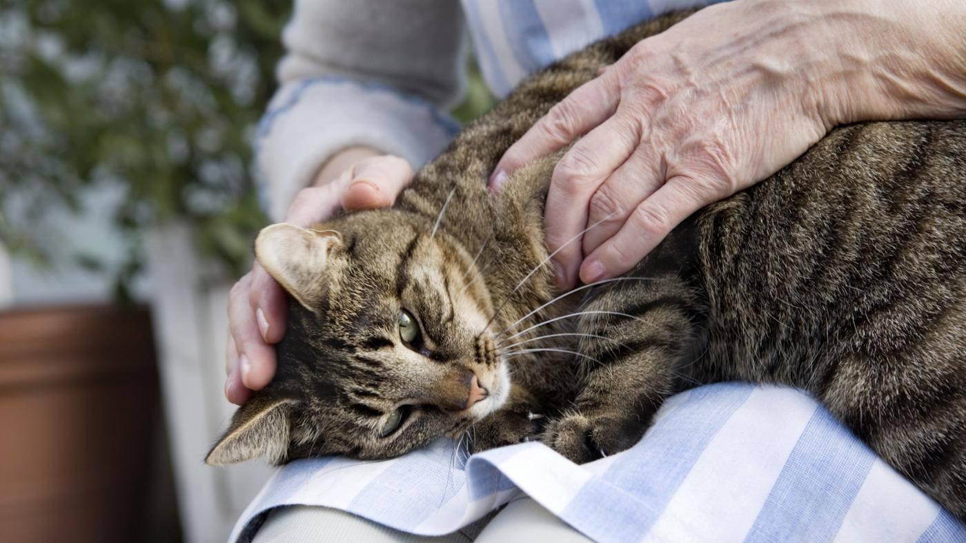 сделать картинки как кошки с человеком короткое