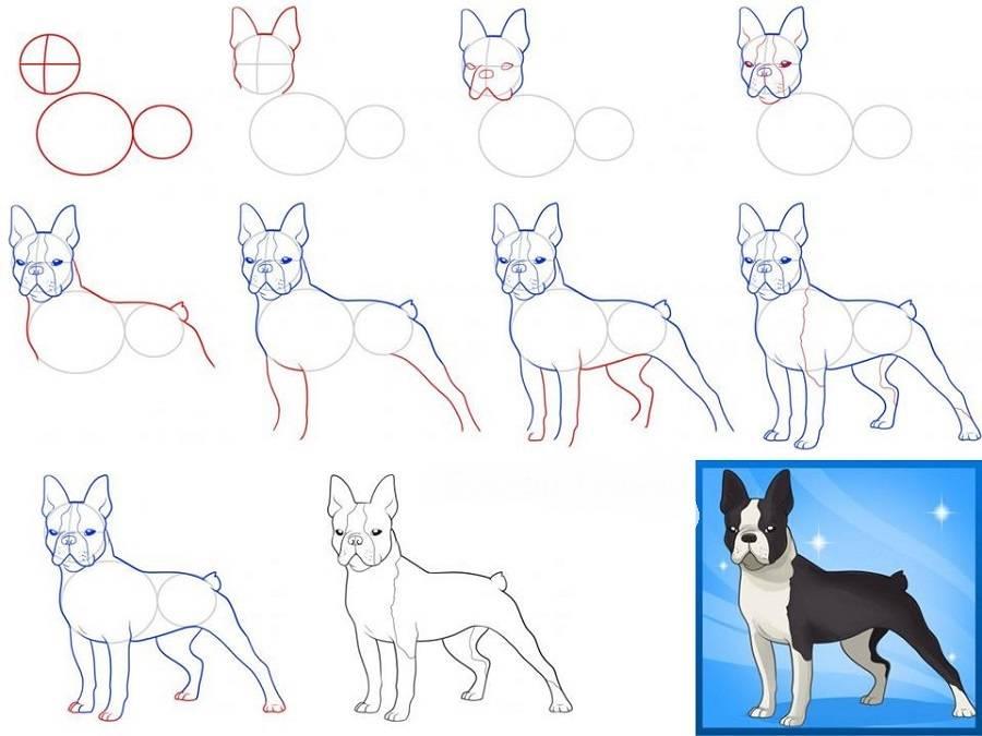 держит руках пошаговые рисунки породистых собак воспитателям