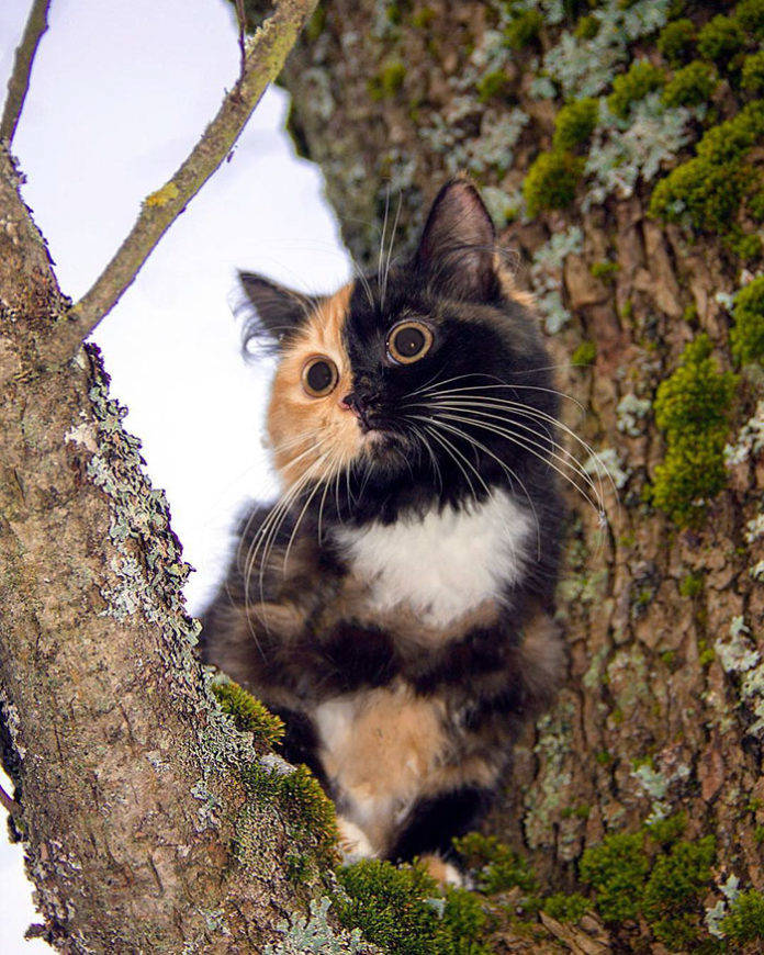 красивые необычные коты мира фото и описание нужно наносить несколько