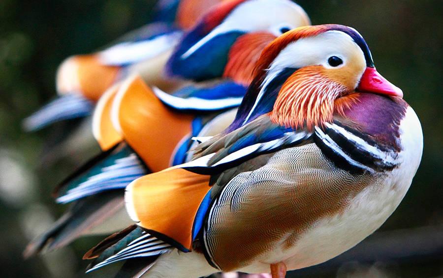 Птицы мира с картинками