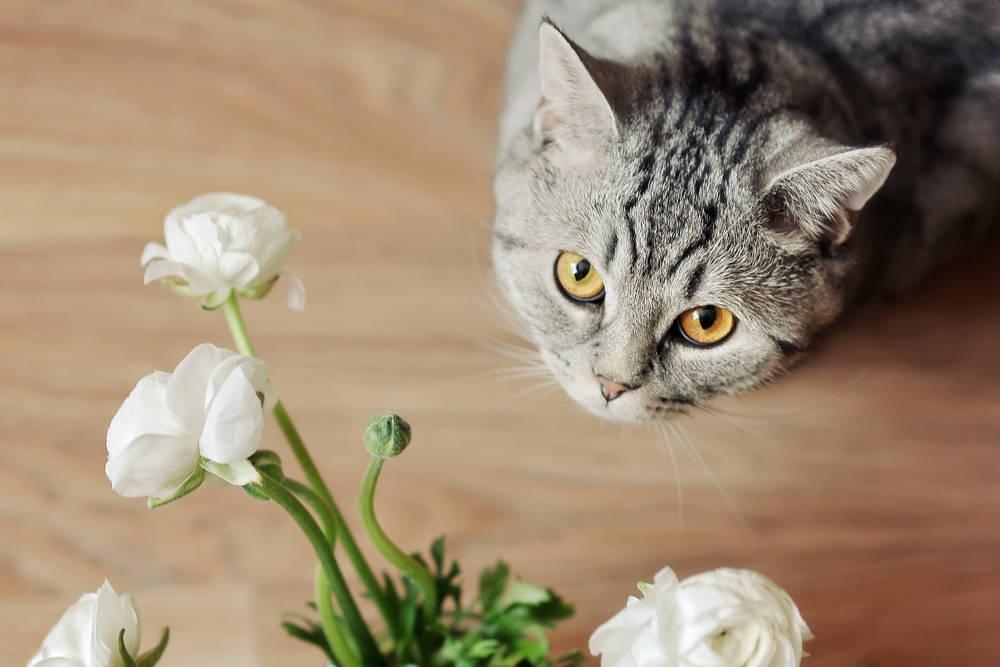 Ядовитые растения для кошек фото