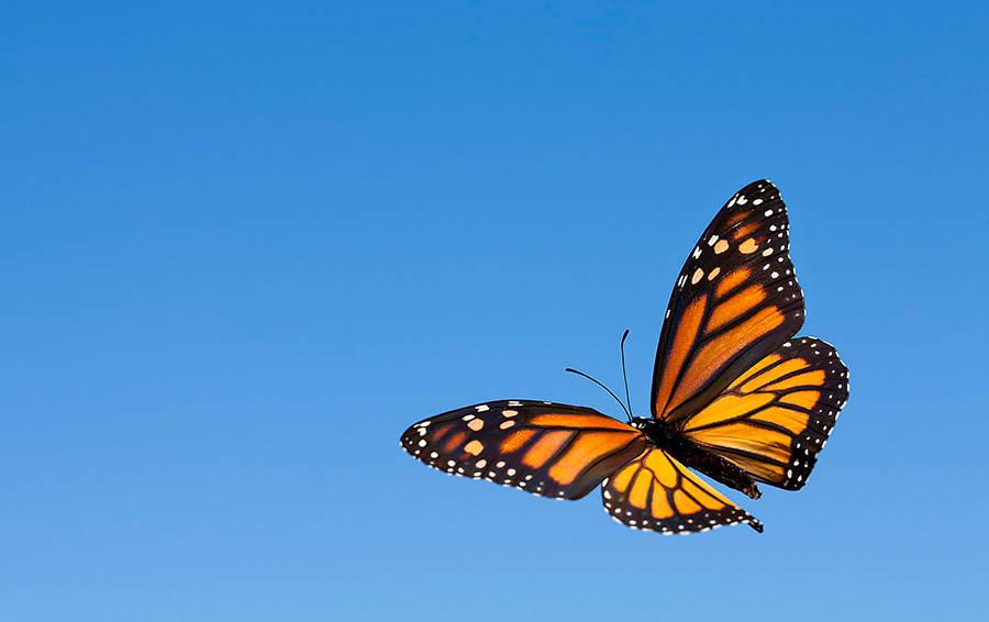 Объемная, летающие бабочки в открытке