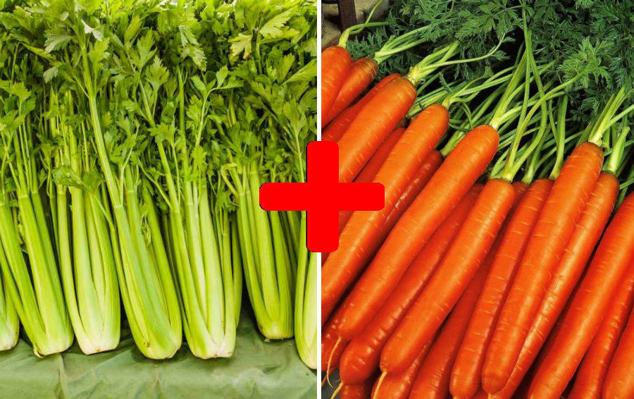 Сельдерей морковь для похудения