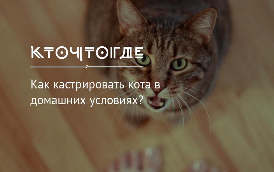 Кастрация животных в домашних условиях 🏆