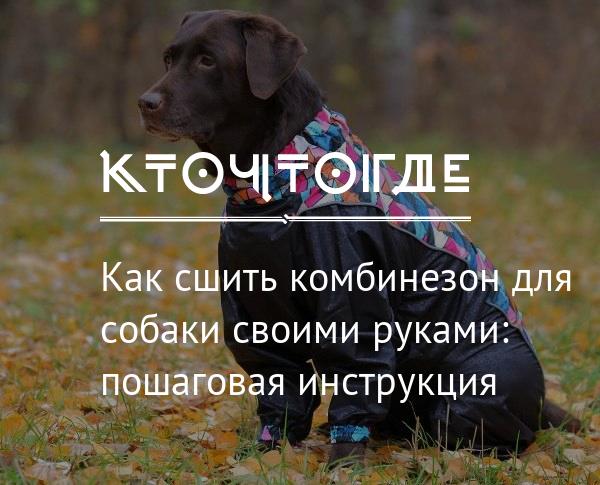 preview_640417 Выкройка комбинезона для собаки: удобная одежда для йорка, таксы и других собак своими руками