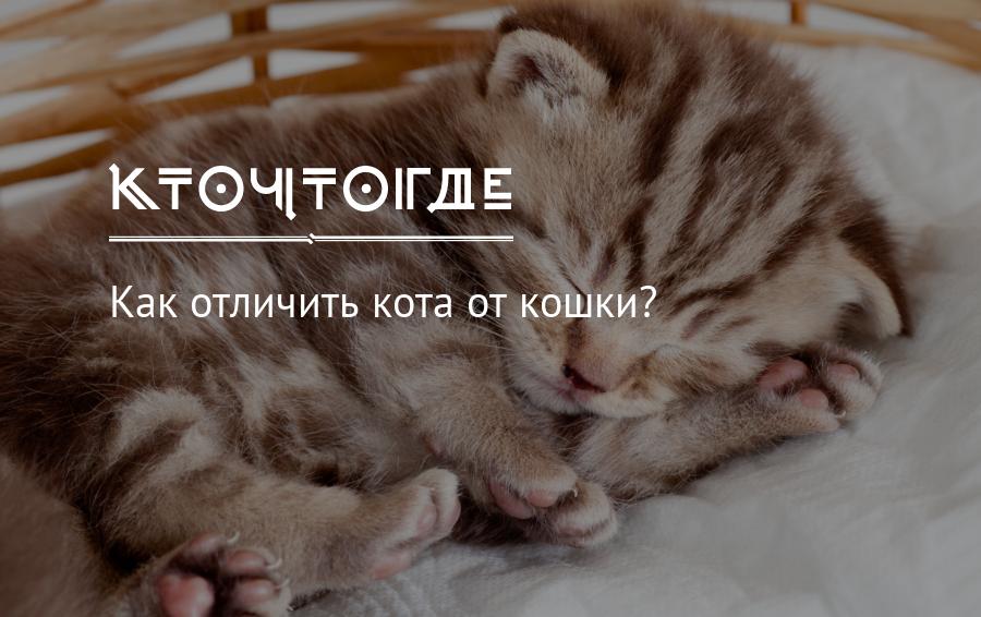 Как отличить кота от кошки и определить пол котёнка