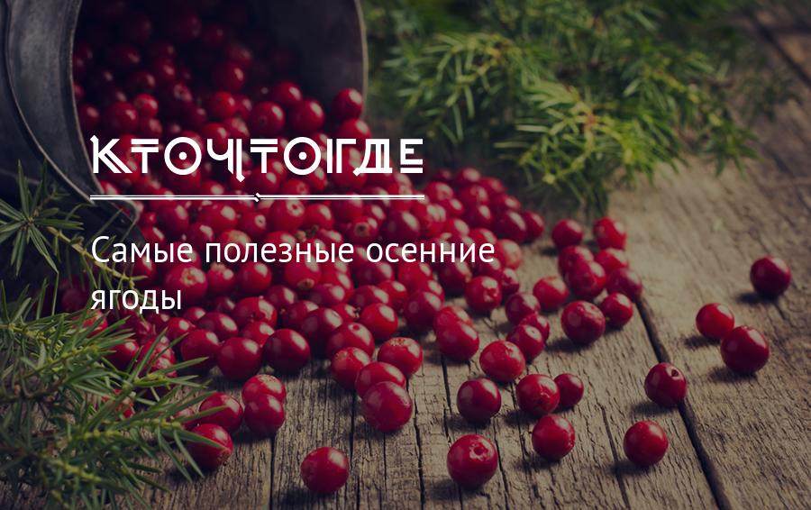 Осенние ягоды названия