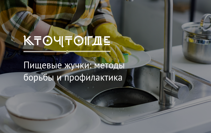 Жуки на кухне в квартире