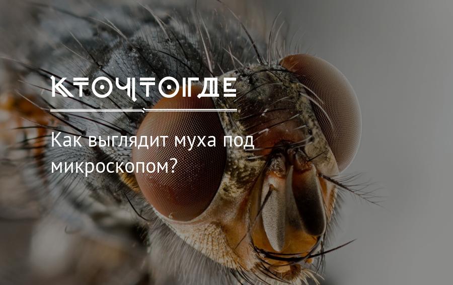 Глаз мухи под микроскопом